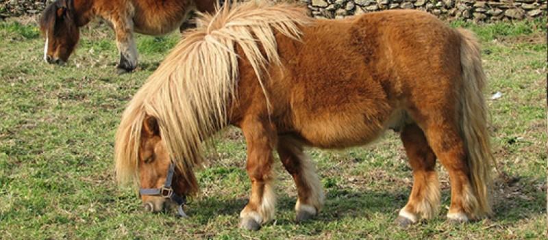 Pony Park